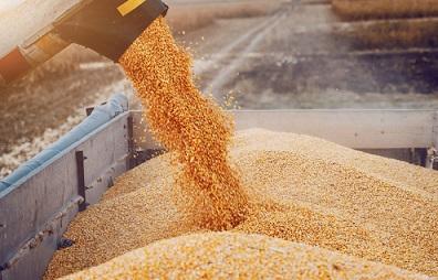 preço do milho em dólar
