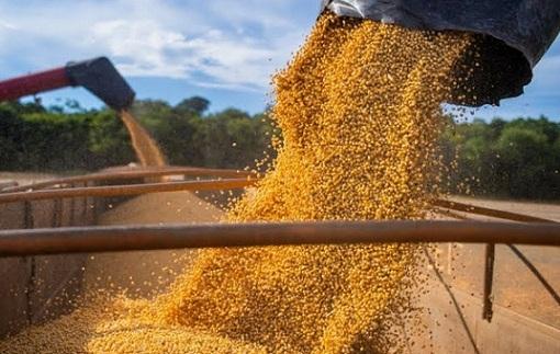 participação da china no agro do Brasil
