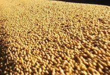 principais importadores de soja