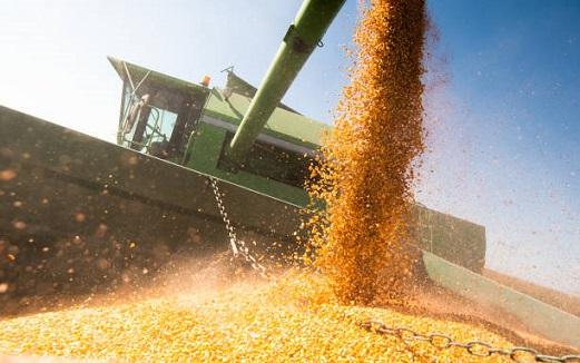 importação de milho pelo Brasil