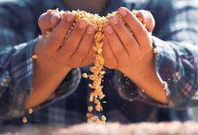maiores produtores mundias de milho