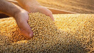 preço mensal da soja